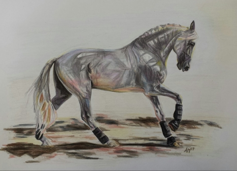 'Mystify' Pencil Equine - Equus Collection