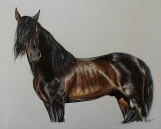 'Apollo' Pencil Equine - Equus Collection