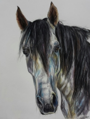 'Shadowfax' Pencil Equine - Equus Collection