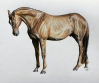 'Reverence' Pencil Equine - Equus Collection