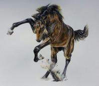 'Spring' Pencil Equine - Equus Collection