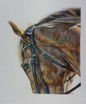 Pencil Equine - Equus Collection